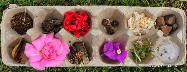 egg carton nature tray