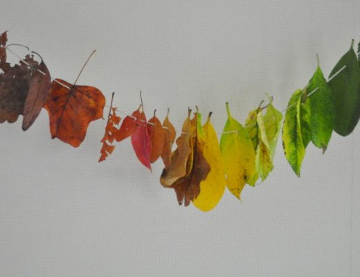 Autumn Rainbow Leaves