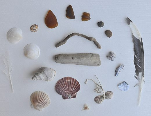 Beach Finds