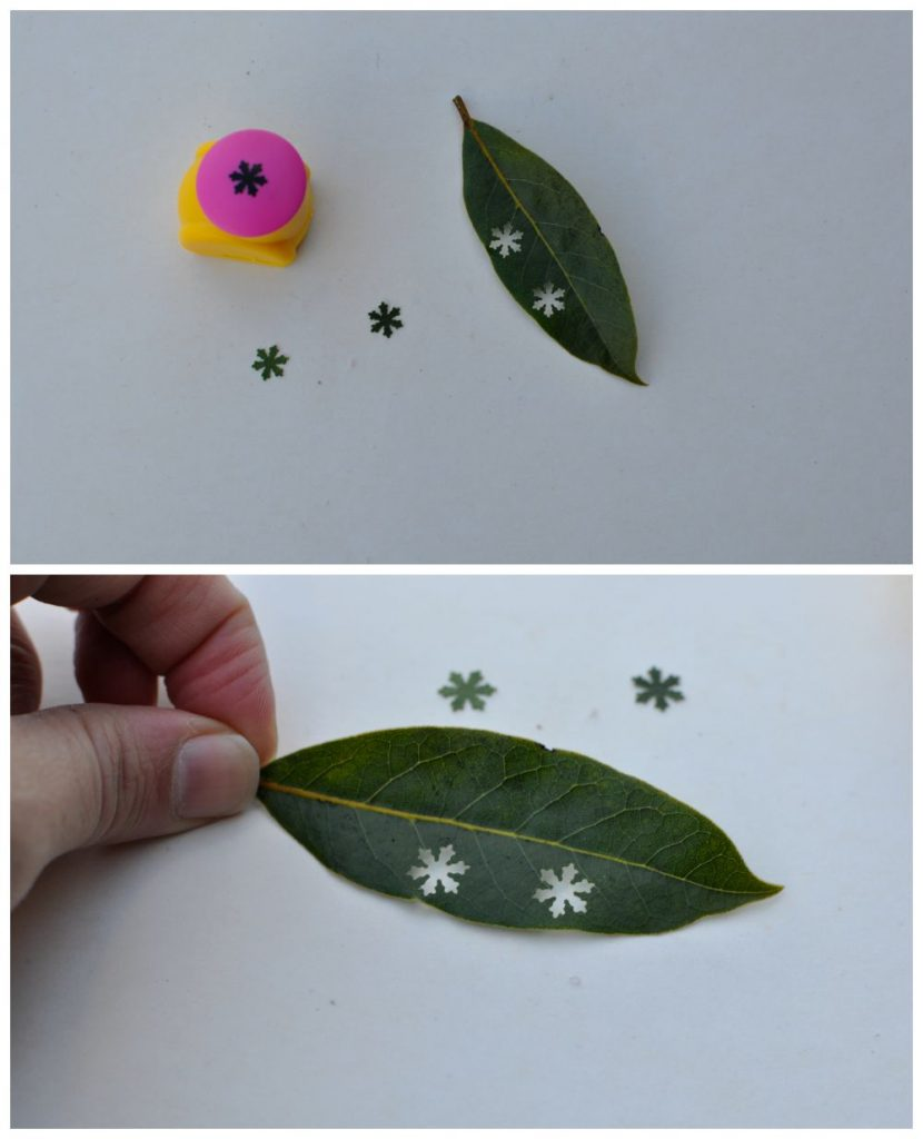 Punch shapes in leaves - fun in the park