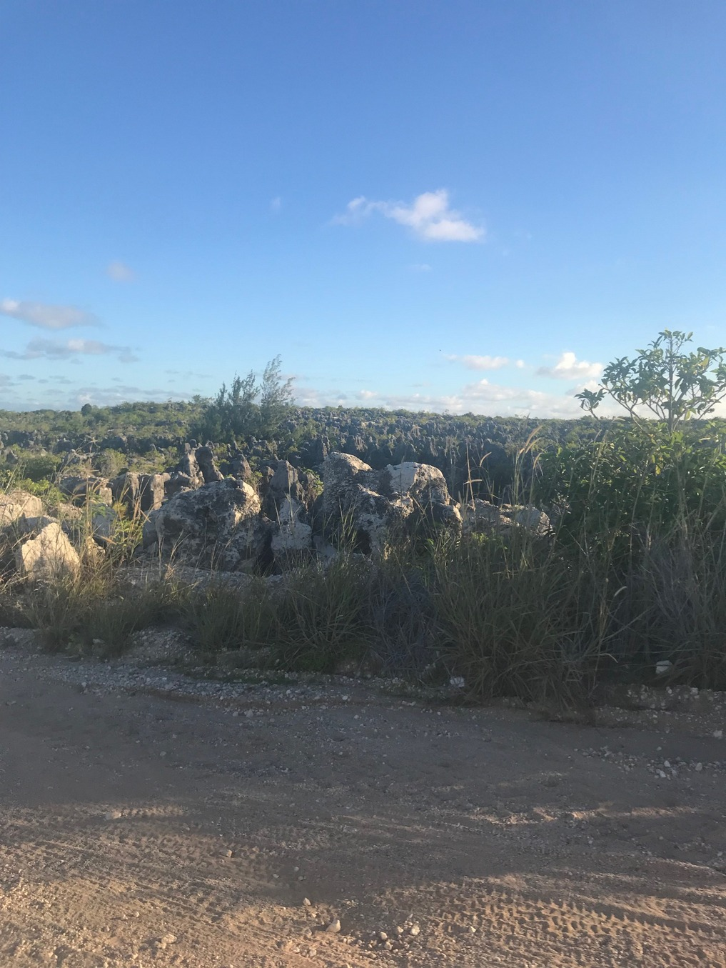 The interior of the island is recovering from aggressive mining operations - Nauru 2018
