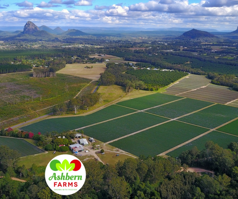 Strawberry Farm - Queensland