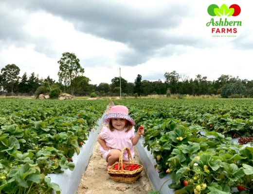 strawberry farms Queensland