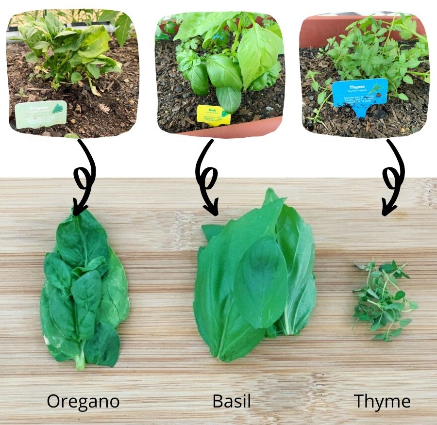 using the Woolworths discover garden herbs