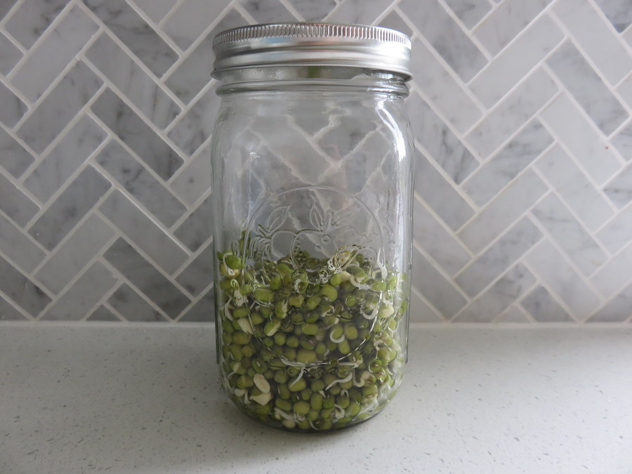 Easy Home-grown Bean Sprouts