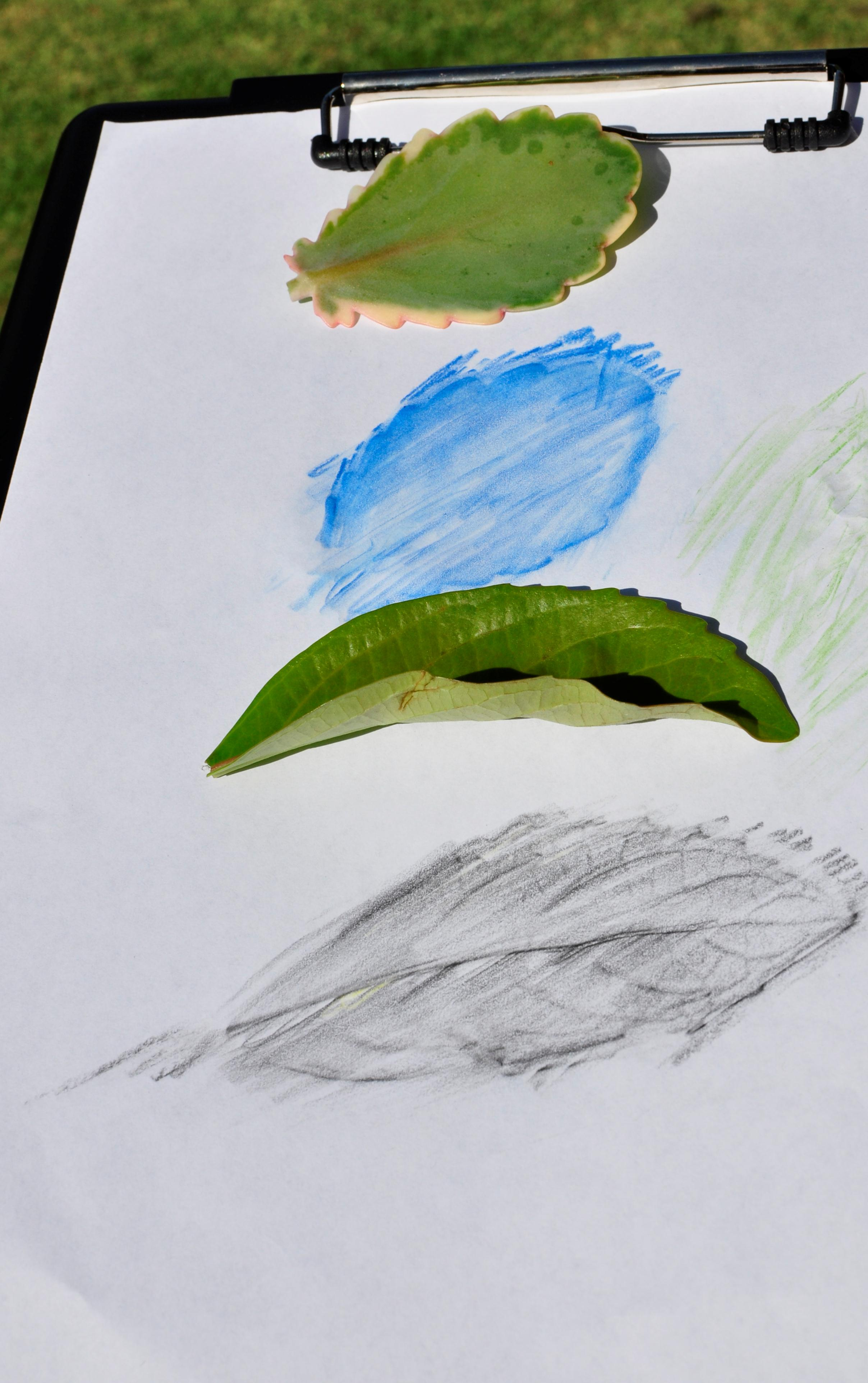 Creative Kids Drawing Leaf Tracing Be A Fun Mum