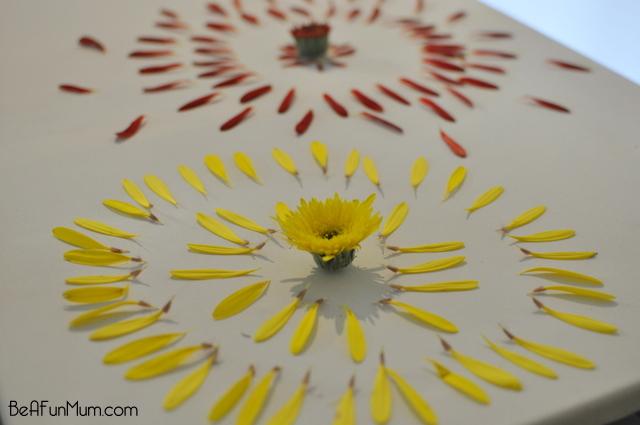 nature crafts -- Decontrusting flowers -- arrange petals