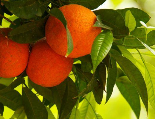 oranges candle