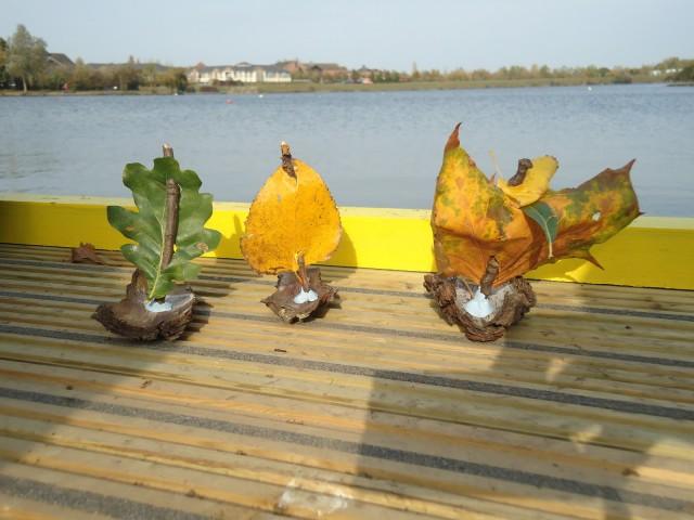 bark boats