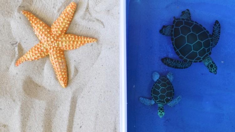 Imaginative Play: Sand & Sea
