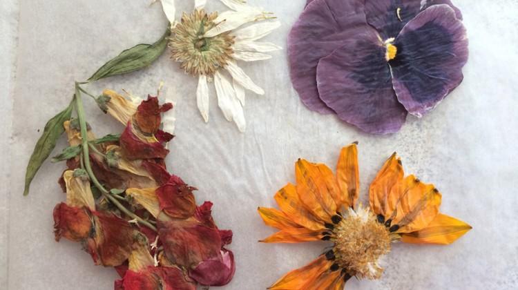 DIY Book Flower Press (free craft from the garden)