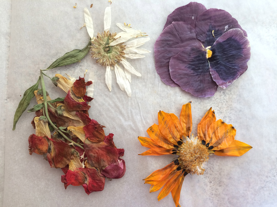 How to press flowers - Book pressed dried flowers free craft from the garden be a fun mum