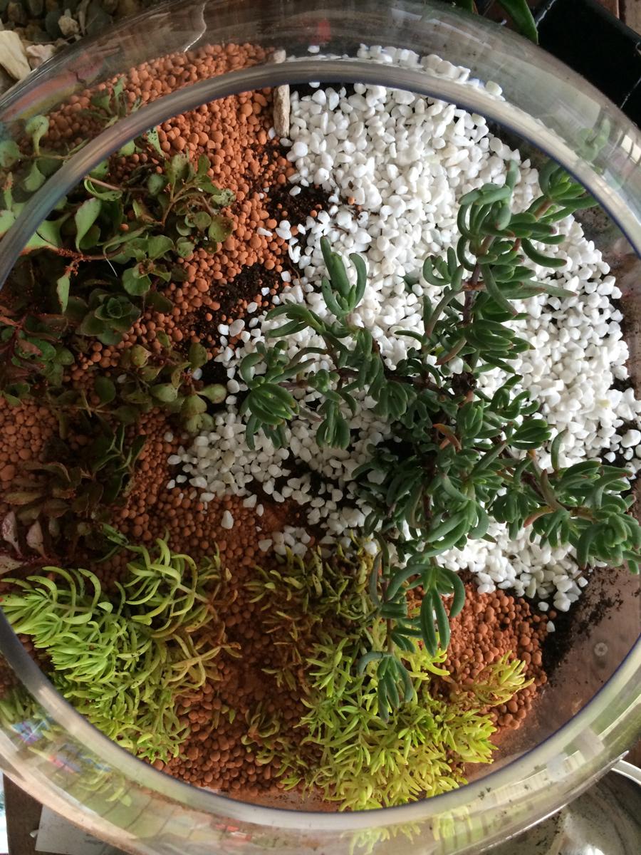 Miniature Terrarium Fairy Gardens start segmenting the garden into ...