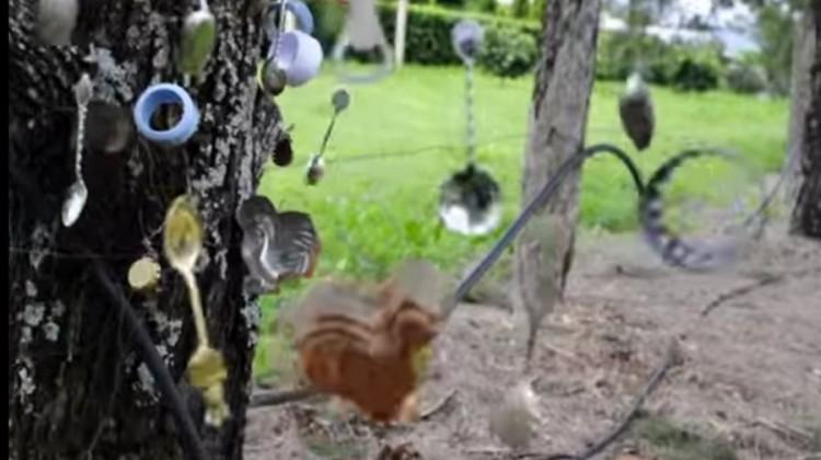 The Music (Backyard) Tree
