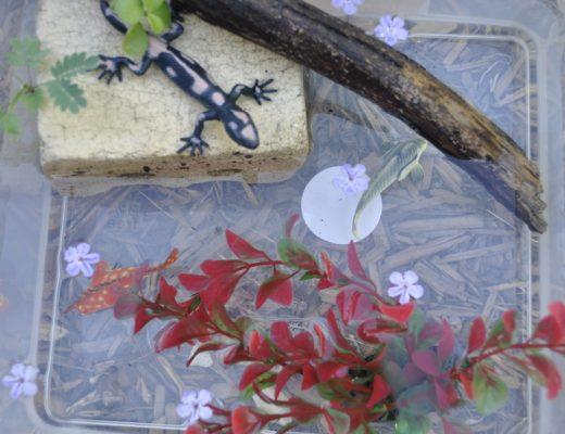 Backyard Play - make mini habitats
