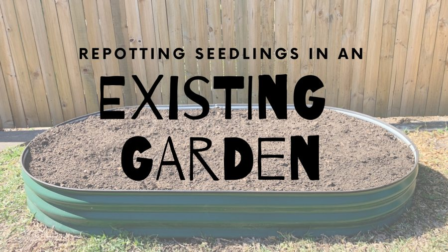 how to plant seedlings into an existing garden